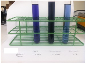 AD15 - Dye Concentration - Image #5