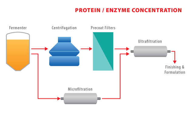 AD29 - Protein-Enzyme Concentration