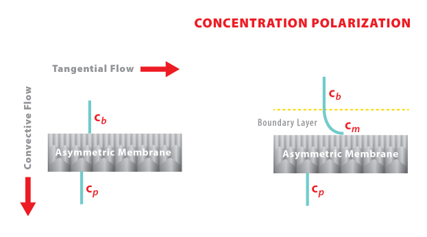 LC9 - Concentration Polarization